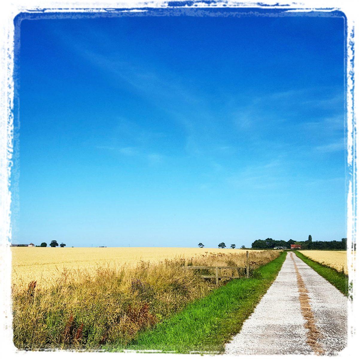 Sunny Walk - Brandesburton