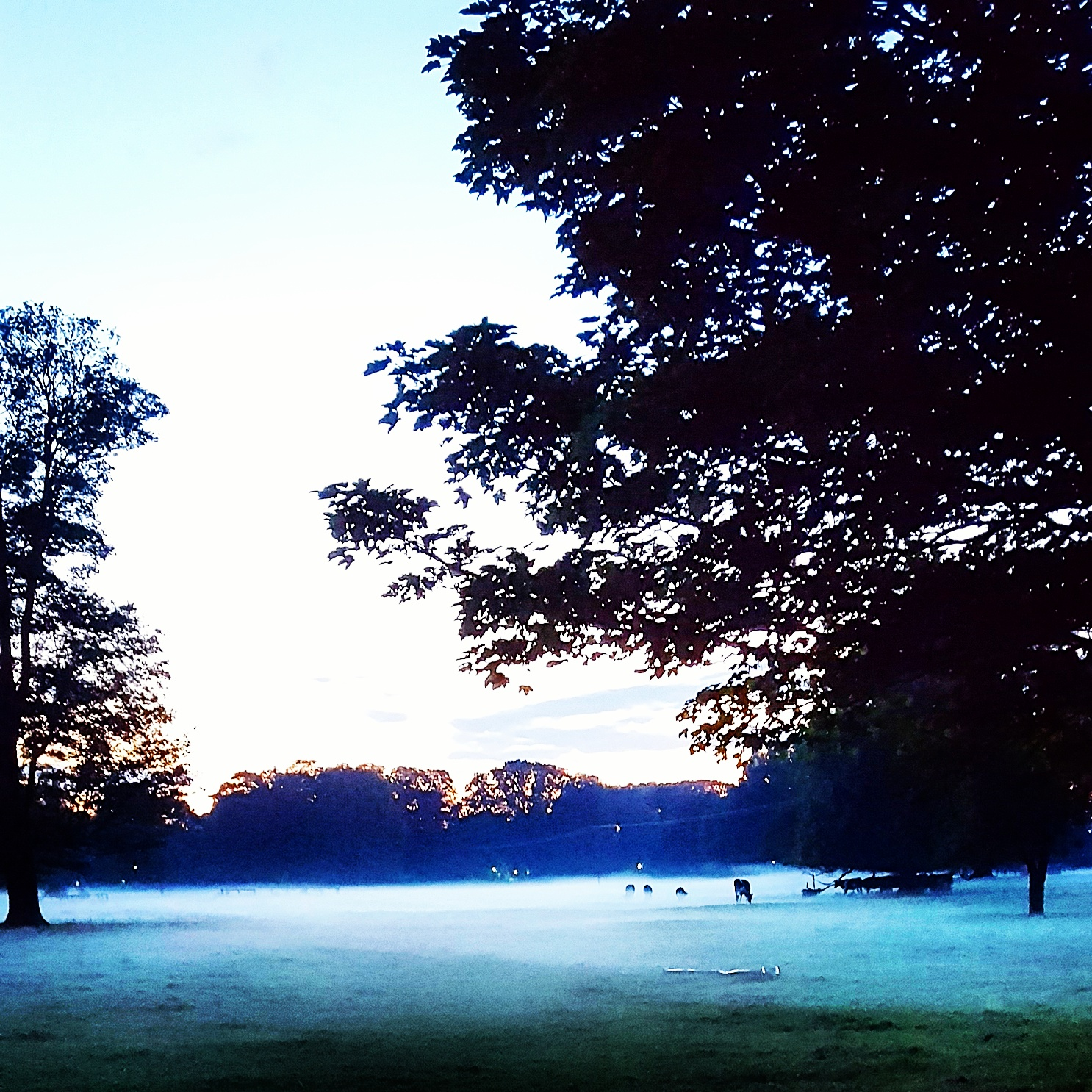 A ghostly mist one August evening near our home...