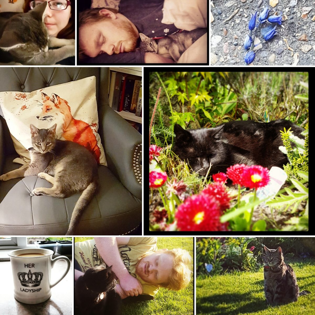 Top 10 Reasons Why Cats Are The Best Writing Partners